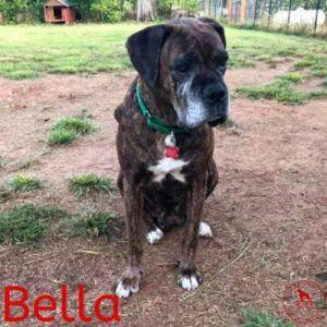 . Bella .