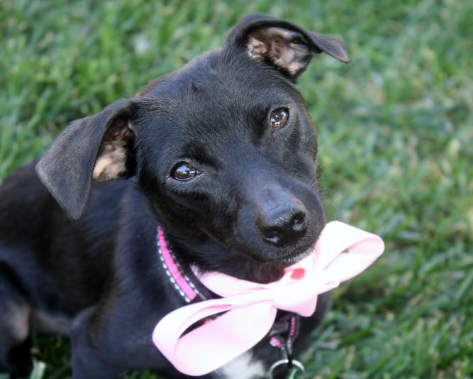 Gretchen - 9 lbs! Fun and playful, a great balance of play and chilling out!