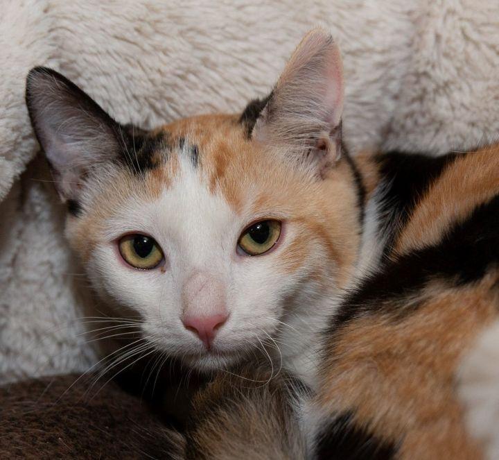 Miss Kitty 1