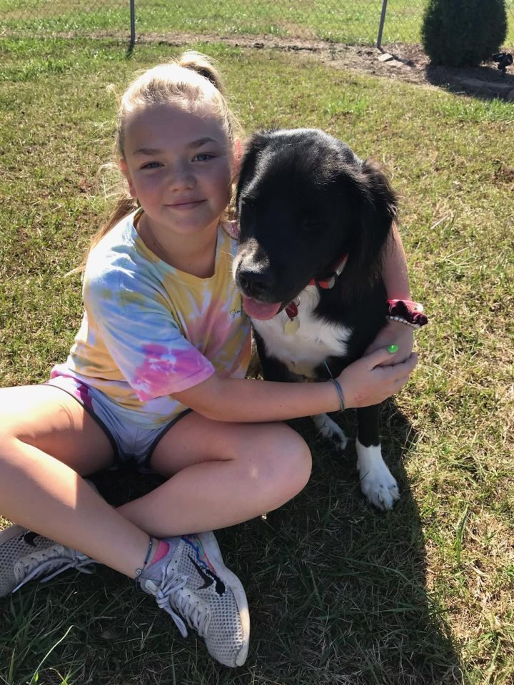 Charlie, an adopted Border Collie Mix in Clayton, NC
