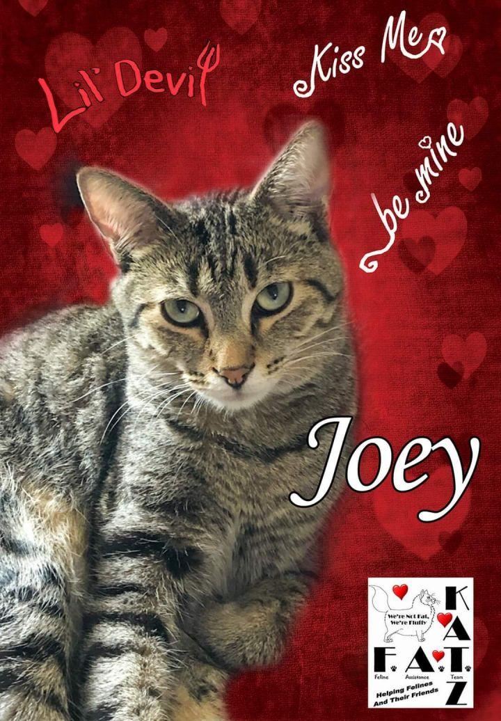 Joey 6