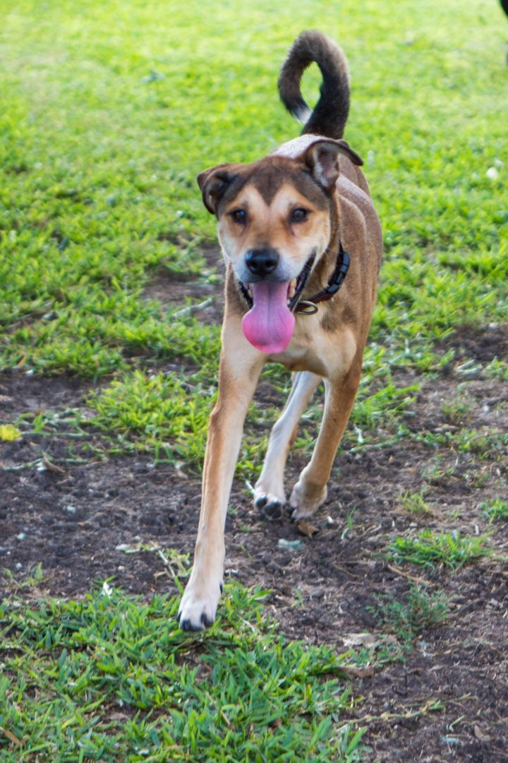 Matilda, an adopted Collie Mix in Temple, TX