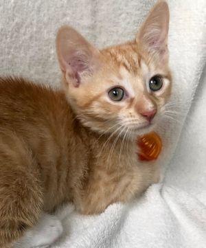 Theodore-Adoption Pending!