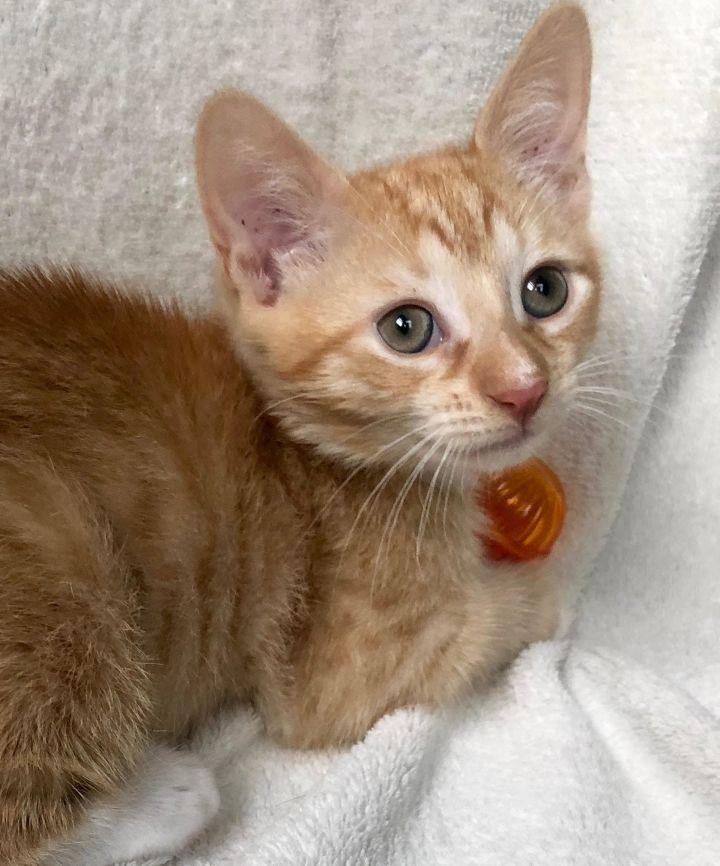 Theodore-Adoption Pending! 1