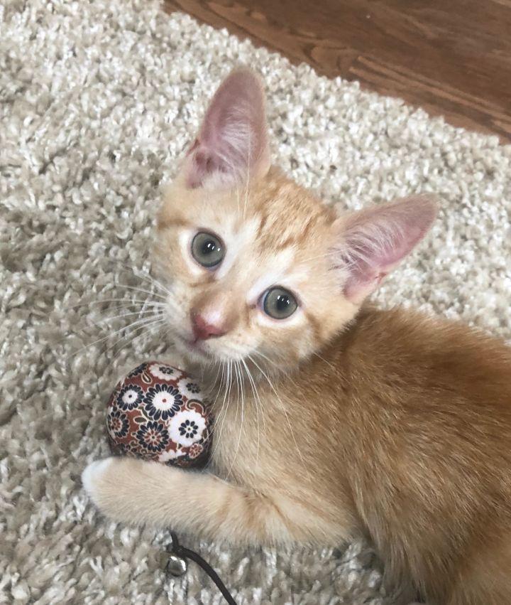 Theodore-Adoption Pending! 2