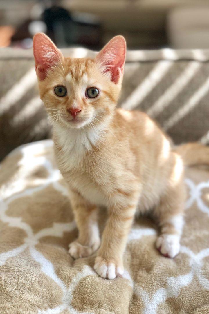 Theodore-Adoption Pending! 4