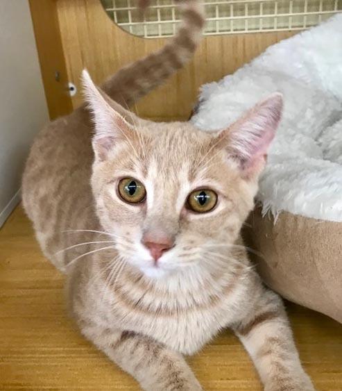 Orion - Forever a kitten 1