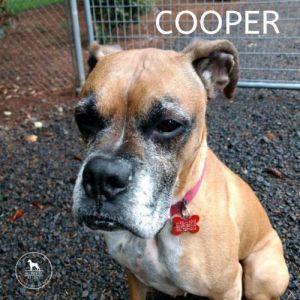. Cooper .