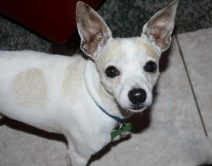 URGENT - Lolo - quiet, calm, sweet and gentle!