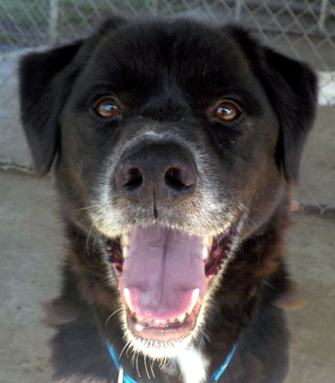 Ross/ Oso A15/ADOPTED!
