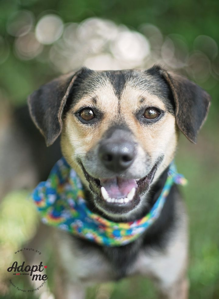 Michael, an adopted Beagle Mix in Kingwood, TX