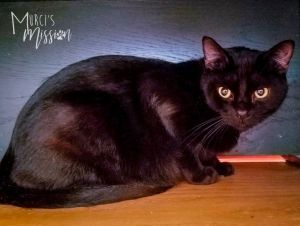 Knox is a two-year old adult male He was found in a garage with his brother and