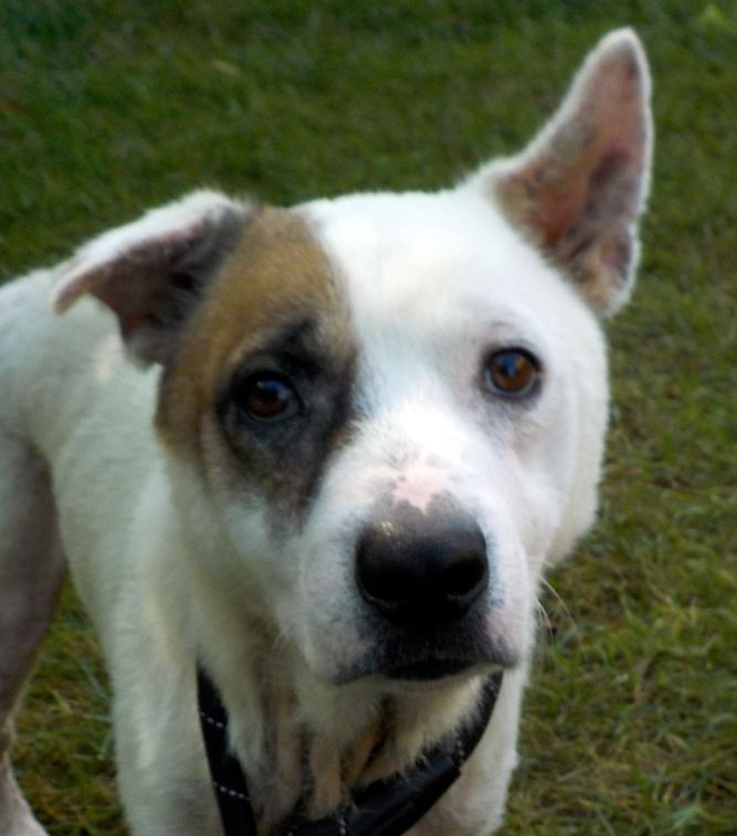 Patch (A18) ADOPTED