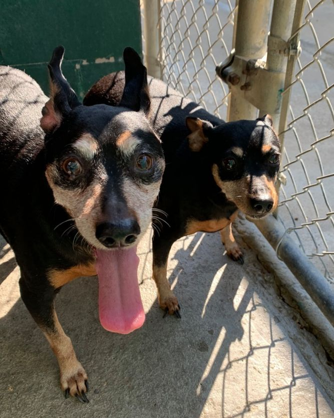 Crazy & Caesar ~ RESCUE ONLY!!