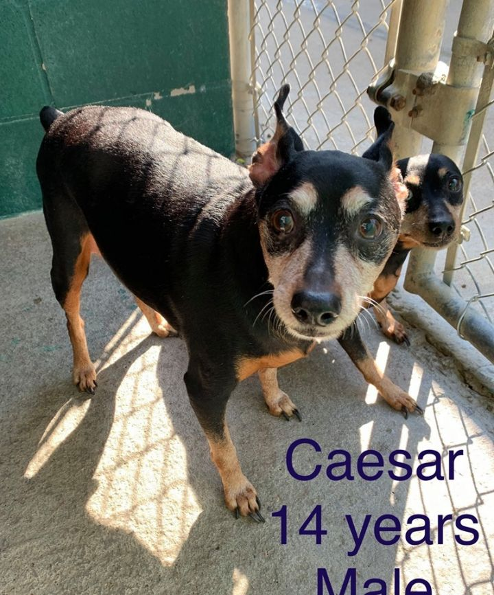 Crazy & Caesar ~ RESCUE ONLY!! 3