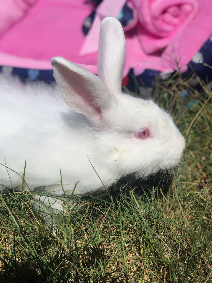 Energizer Bunny 2