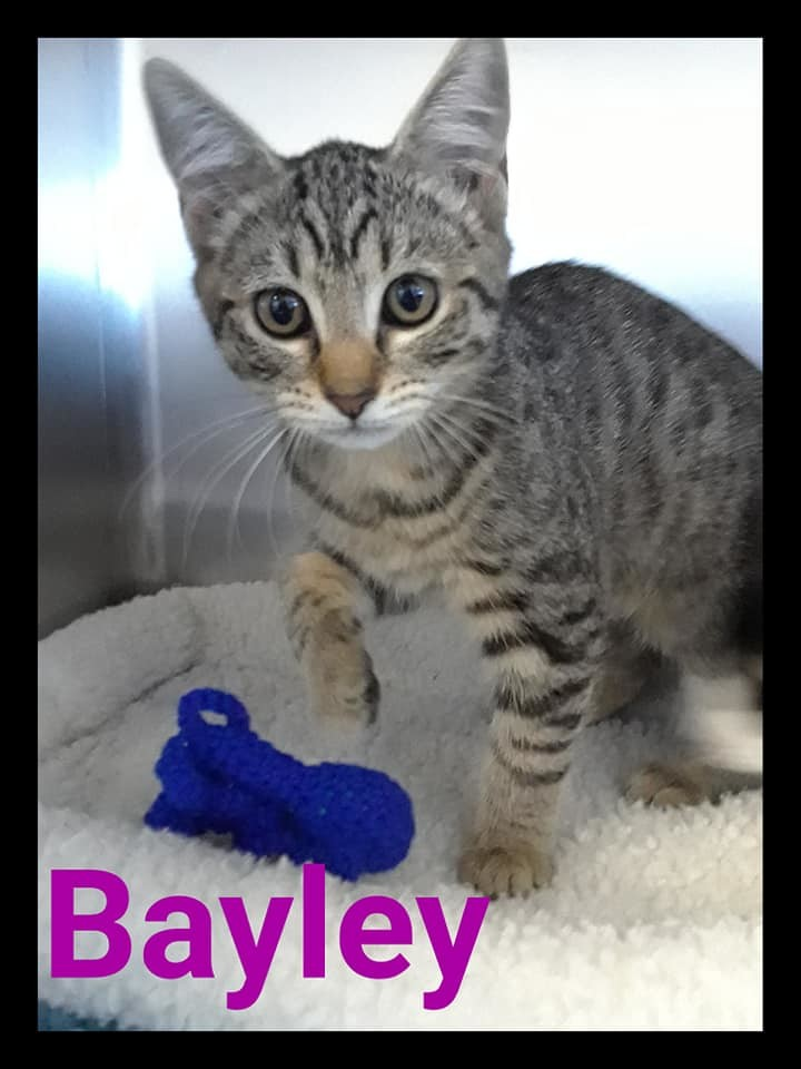 Bayley 1