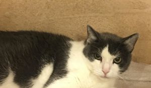 Jewel (Resting Grumpy Cat Face)