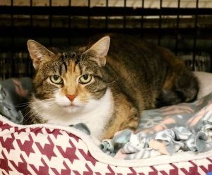 August is a stray kitty who arrived at DAWS in you guessed it August She came to us with her