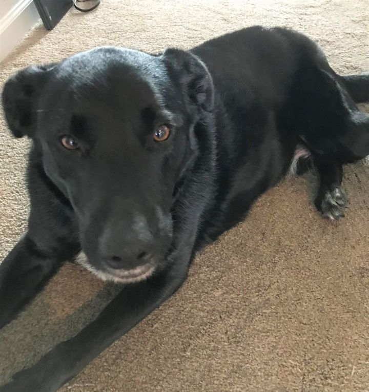 Mack, an adopted Labrador Retriever Mix in Boiling Springs, PA