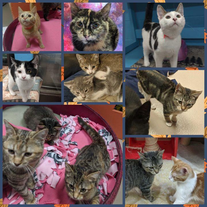 Kittens! 1