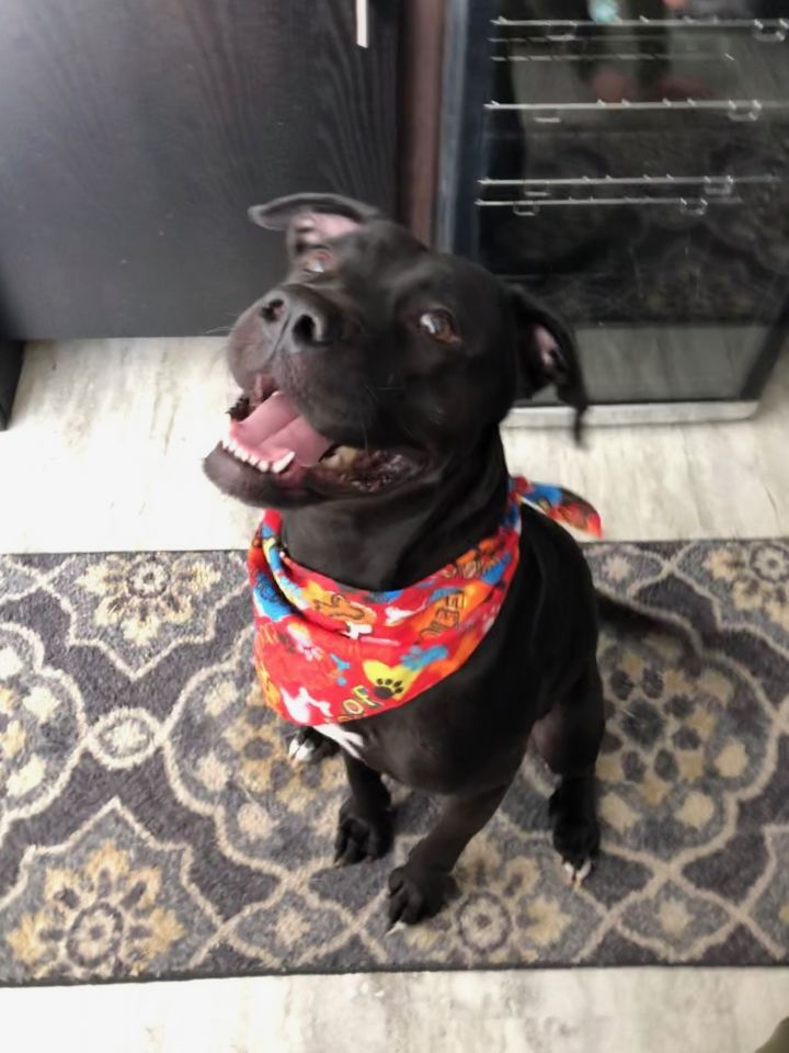 Quinn, an adoptable Labrador Retriever Mix in Homer, NY