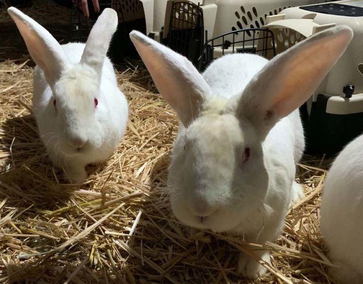 Bunnies! 3