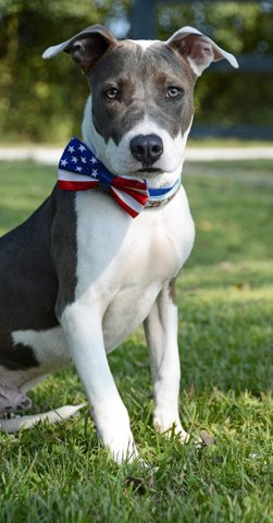 Hendrix, an adoptable Terrier Mix in Carencro, LA