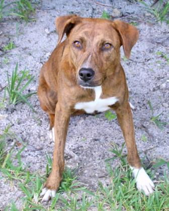 Penny, an adoptable Mixed Breed in Loxahatchee, FL