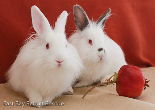 Max and Ruby (BONDED PAIR!)