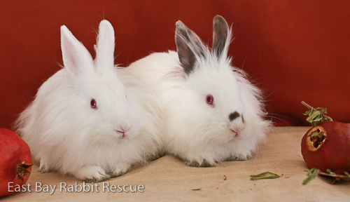 Max and Ruby (BONDED PAIR!) 2