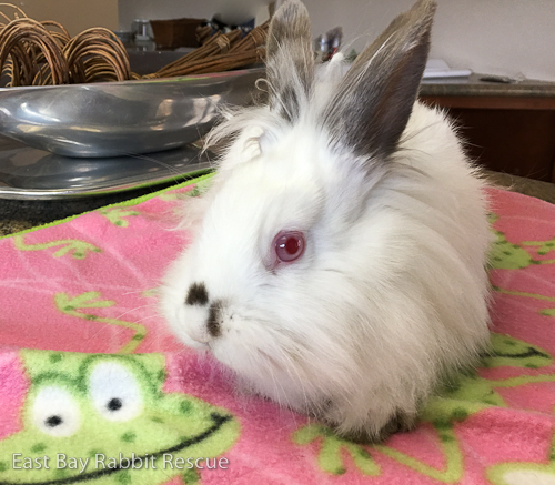 Max and Ruby (BONDED PAIR!) 4