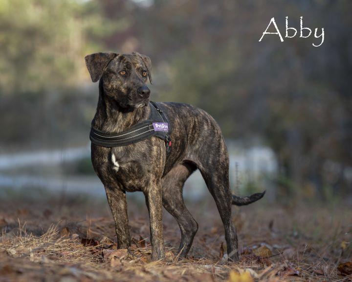 Abby - video 4