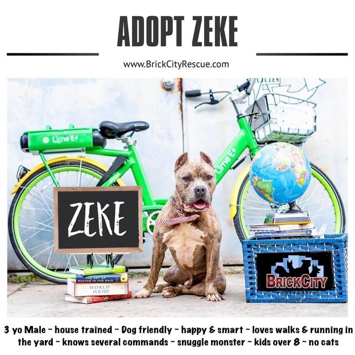 Zeke, an adopted Pit Bull Terrier in Lincoln Park, NJ