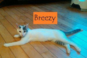 Breezy (Ginny's foster)