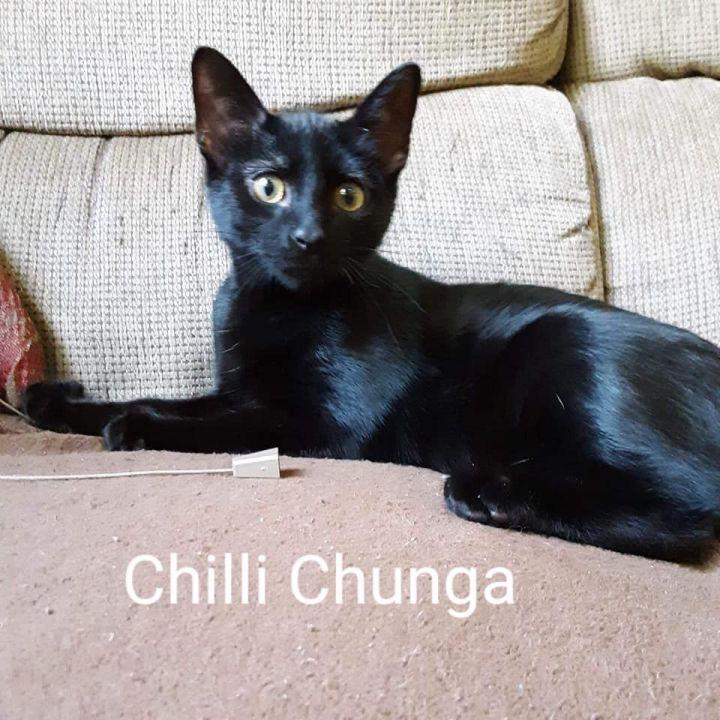 Chili Chunga 1