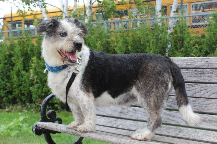 Jak, an adopted Terrier & Basset Hound Mix in Toronto, ON