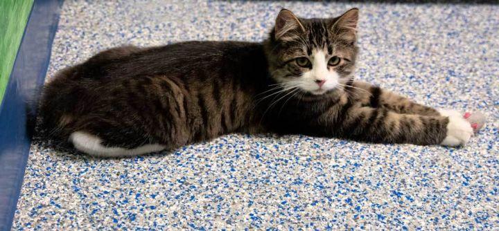 Bob the kitten 1