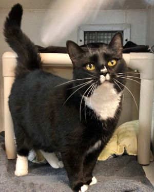Becky is a sweet kitty whose owner sadly passed away from Covid-19 She is a bit spicy and although