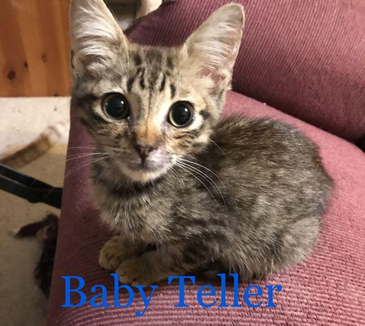 Teller 2