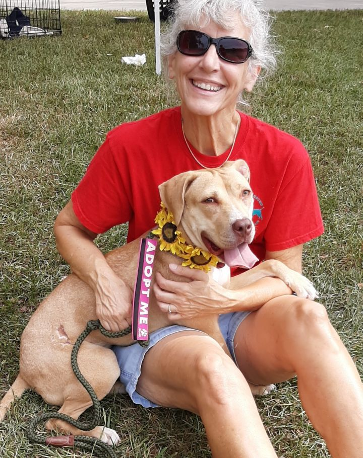 Alivia, an adopted Labrador Retriever Mix in Clayton, NC