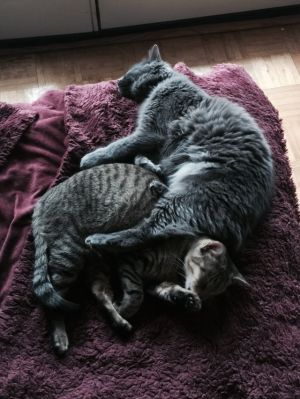 Meet Puffy and Einstein This brother sister duo are extremely affectionate loving and playful The