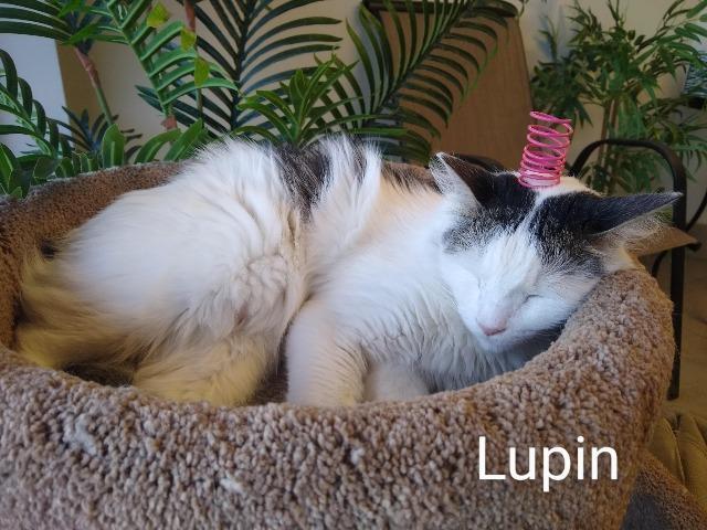 Lupin 4