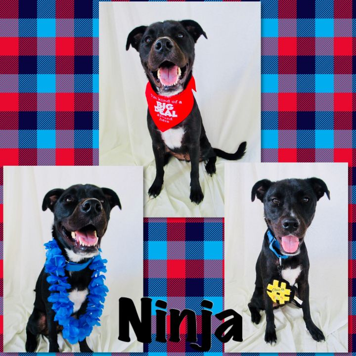 Ninja - Pawsitive Direction Program 1