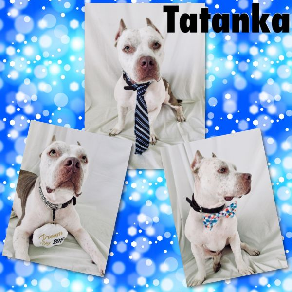 Tatanka - Pawsitive Direction Program