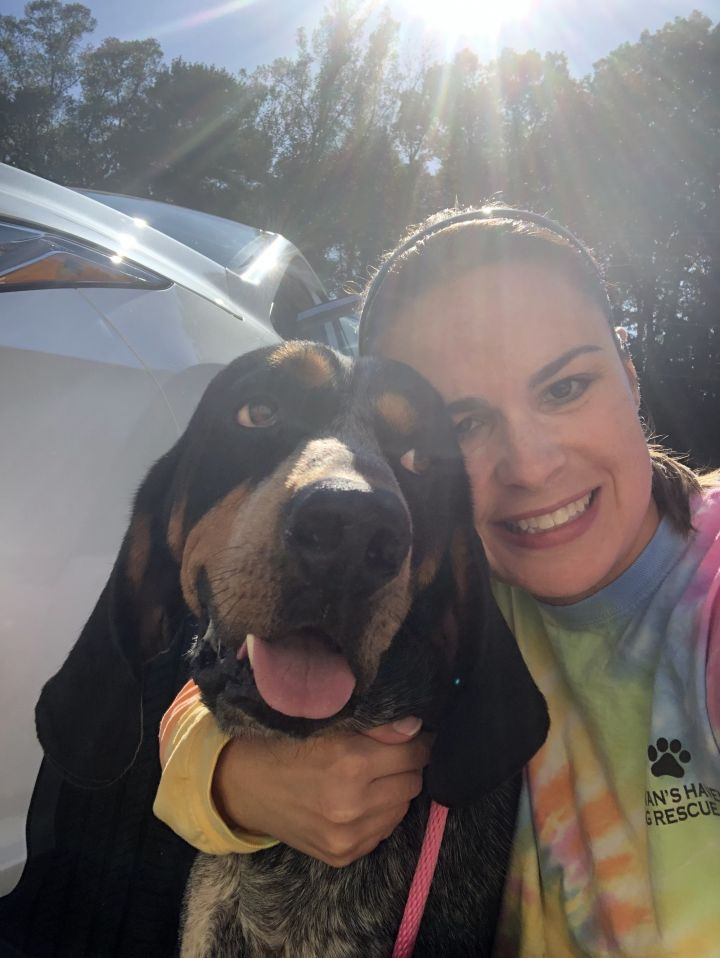 Rufus Earl, an adoptable Coonhound in Conover, NC