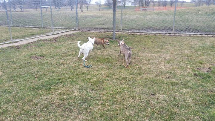 Clarabelle, an adoptable Terrier Mix in Lake Odessa, MI