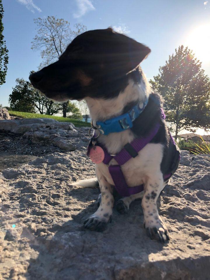 Jasper - Loving and Adorable 2