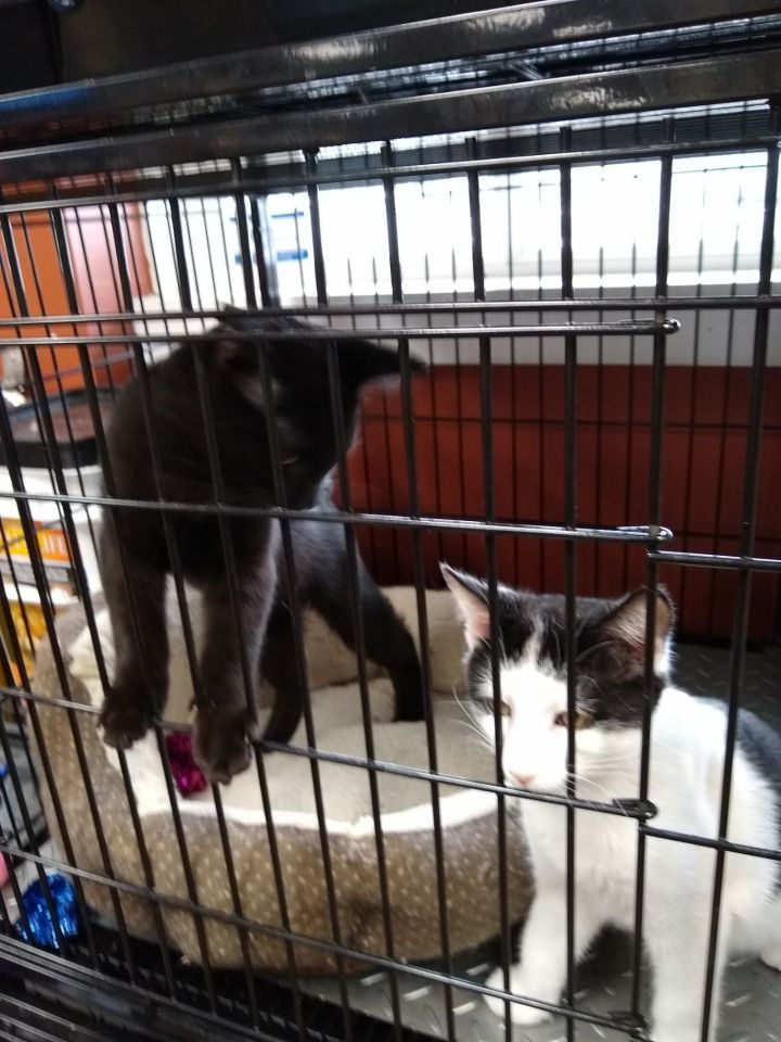 Sully & Mike - Playful and affectionate (Pet Valu) 3