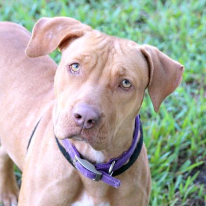 Bailey (aka Netta) 1
